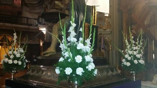 Flores Las Camelias