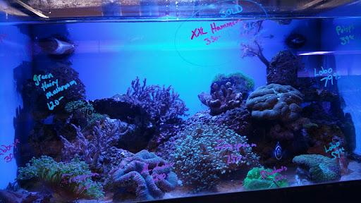 Pet Supply Store «Sea Level Aquarium», reviews and photos, 28 US-46, Pine Brook, NJ 07058, USA