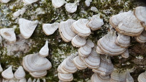 Nature Preserve «Macricostas Preserve», reviews and photos, 121 Christian St, New Preston, CT 06777, USA