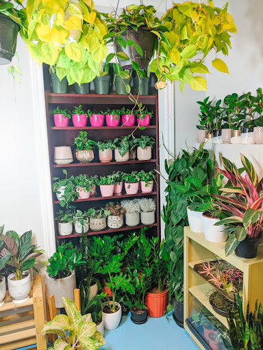 Garden center Rooted Connection in Harrowsmith (ON) | LiveWay