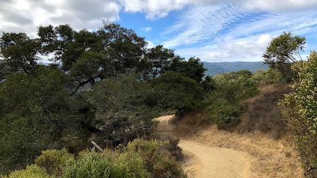 Tree Removal in San Carlos, CA
