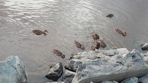 Parc Agora Naturelle à Amos (QC) | CanaGuide