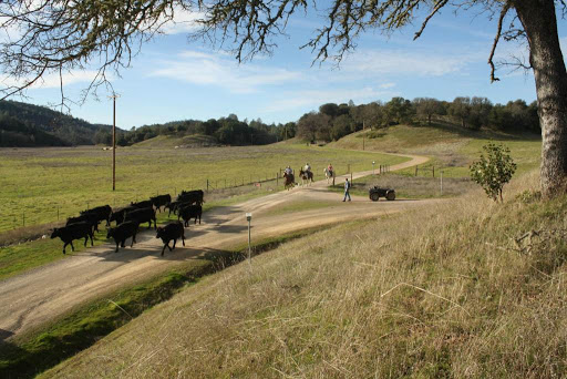 Winery «Six Sigma Ranch and Winery», reviews and photos, 13372 Spruce Grove Rd, Lower Lake, CA 95457, USA