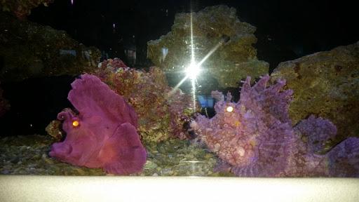 Tropical Fish Trop Aquarium Reviews And Photos 3125 E Tropicana Ave D Las Vegas