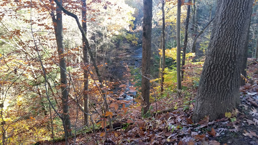 Tourist Attraction «Brandywine Gorge Trail», reviews and photos, 8176 Brandywine Rd, Sagamore Hills, OH 44067, USA