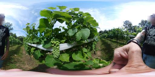 Vineyard «Nickle Creek Vineyard», reviews and photos, 12 King Rd, Foster, RI 02825, USA