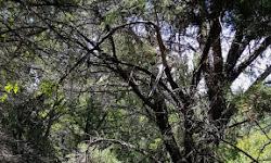Canyonlands / Mt Lakeway Trail