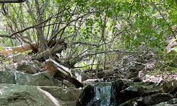 Burch Creek Trail