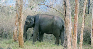 Coorg Bandipur Packages