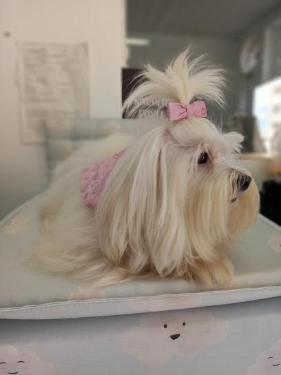 Boutique Pet MS