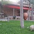 Ziraat Bankası Çayırhan Şubesi