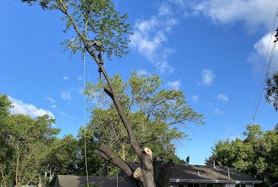 M & R Landscape & Tree Service