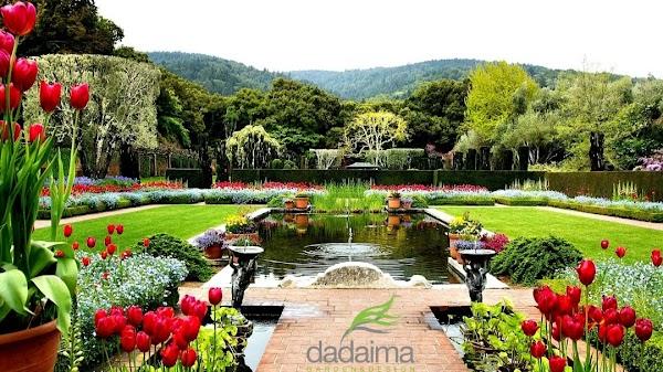 Dadaima  Centro de Jardinería - Vivero - Proyectos y Reformas