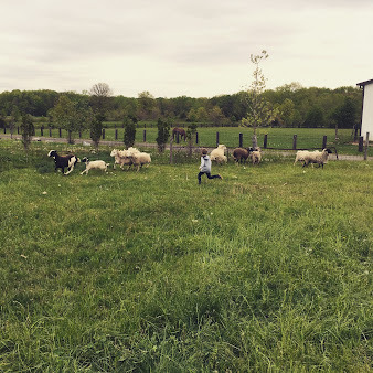 Dey Farm at Oliveira Acres
