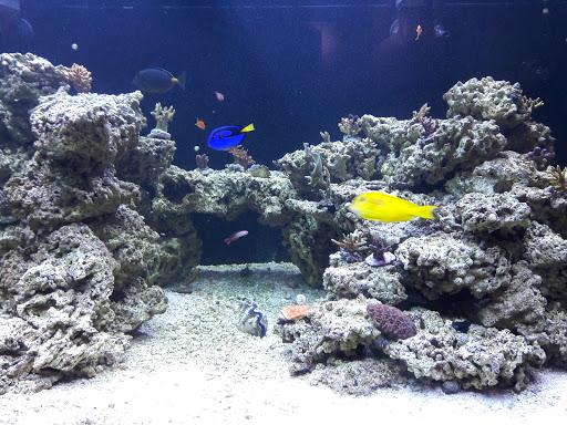 Aquarium Seaquest Interactive Aquarium Las Vegas Reviews And Photos  S Maryland Pkwy