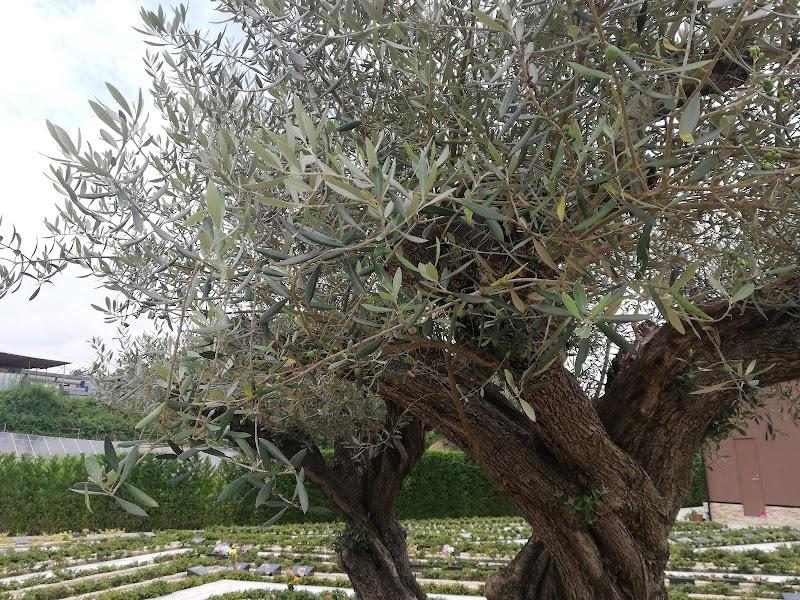ハピネスパーク 千年オリーブの森(樹木葬)