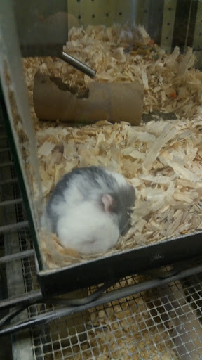 Pet Store «North East Discount Pet Center», reviews and photos, 49 Bridge St #5, Pelham, NH 03076, USA