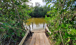 Pine Island Conservation Area