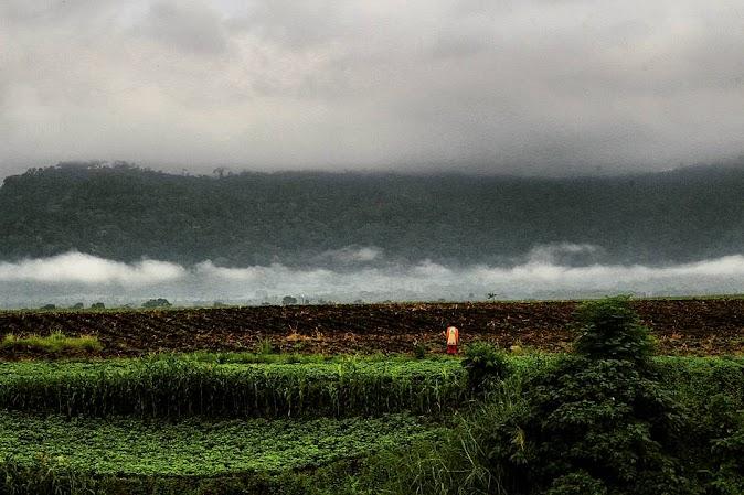 Pemandangan sekitar Doesoen Kakao Banyuwangi Top