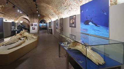 Museo Paleontológico Territoriale dell'Astigiano