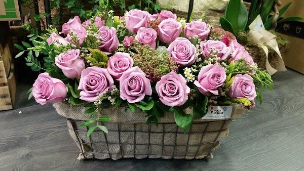 Flor de Holanda