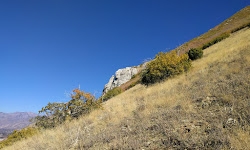 Cherry Canyon Logging Trail