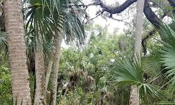 Weldon B. Lewis Park / Ancient Oaks Preserve