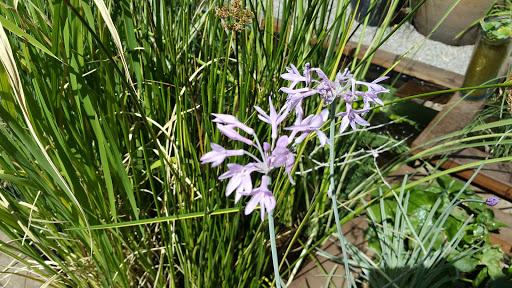 Garden «Sierra Water Gardens», reviews and photos, 2110 Dickerson Rd, Reno, NV 89503, USA