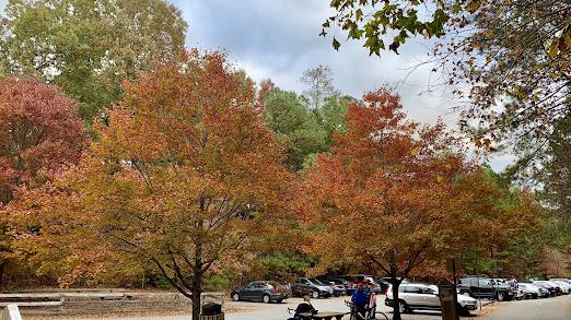 Tree Services Smyrna