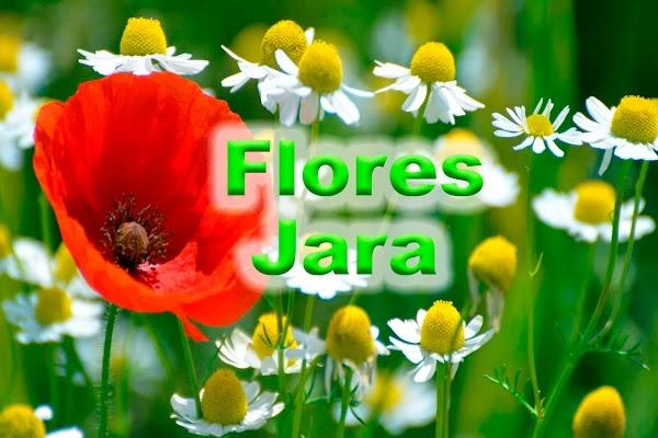 Flores Jara