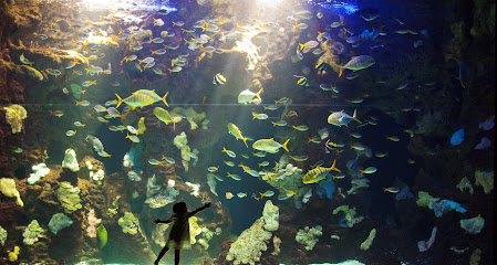 Aquarium de San Sebastián