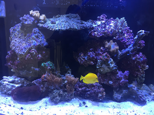 Tropical Fish Store «Live Rock N Reef», reviews and photos, 2196 W 3500 S, West Valley City, UT 84119, USA