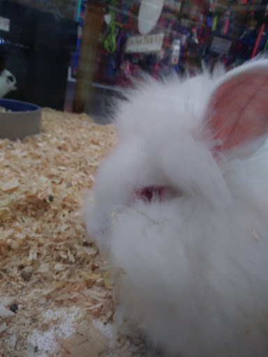 Pet Store «Pet Emporium», reviews and photos, 1501 41st Ave # M, Capitola, CA 95010, USA