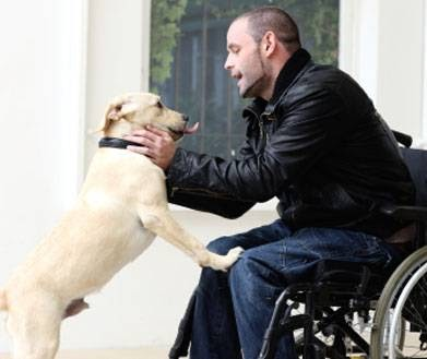 Adiestrador de perros en Alicante