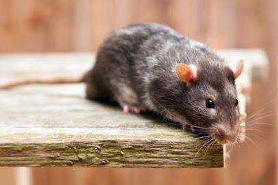 deratiseur Gestionnaire Des Nuisances Animales G.N OYE PLAGE