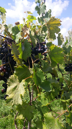 Winery «Blackhawk Winery», reviews and photos, 28153 W Ditch Rd, Sheridan, IN 46069, USA