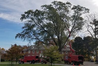 Crawford Tree & Landscape Services, Inc.