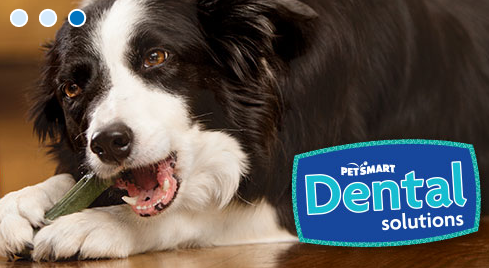 Pet Supply Store «PetSmart», reviews and photos, 2435 Prairie Center Pkwy, Brighton, CO 80601, USA