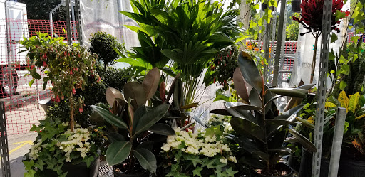 Garden center Scarlett Gardens Nursery & Florist, Formally Tumino Garden & Floral Gallery in York (ON) | LiveWay