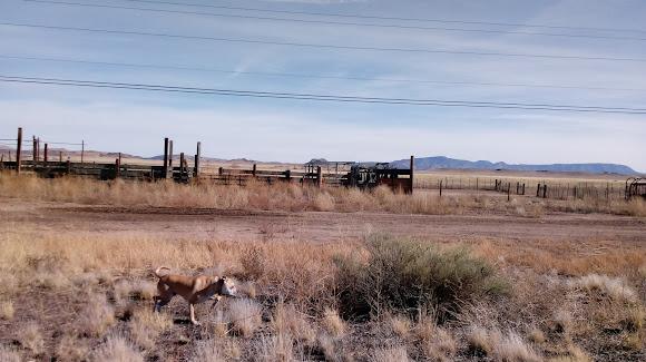 Yavapai Landscaping in Chino Valley