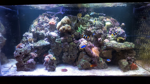 Pet Supply Store «Strictly REEF», reviews and photos, 907 W Moana Ln, Reno, NV 89509, USA