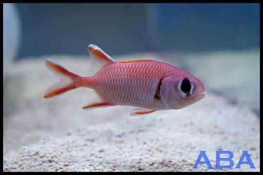 Aquarium «Atlantic Blue Aquariums», reviews and photos, 801 Northlake Blvd, North Palm Beach, FL 33408, USA