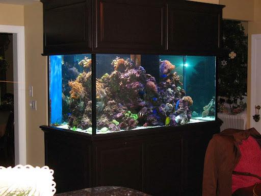 Tropical Fish Store «Allquatics Inc.», reviews and photos, 3048 S Broad St, Trenton, NJ 08610, USA