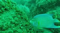 Diving PCB - Panama City Beach Scuba Diving