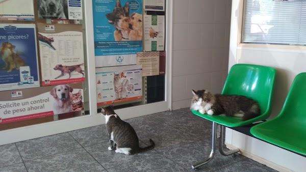 Centro Veterinario CasablancaClínica