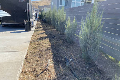 Maile Landscaping & Hauling – Residential Yard Landscaping Contractor, Professional Tree Removal in Magna UT