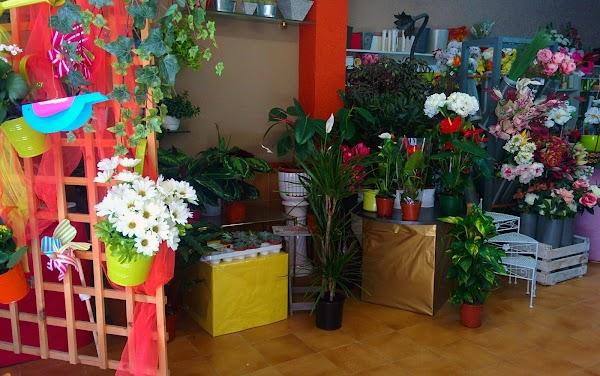Floristeria Alguaire Flors i Plantes Adelina