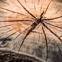 Jay's Stump Grinding & Removal (WA)