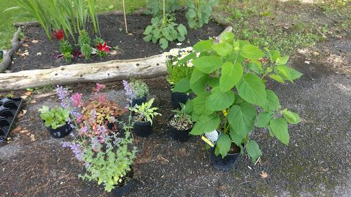Garden center Made in the Shade Perennials in Gananoque (ON)   LiveWay