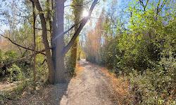 The Gailey Trail at Nicholls Park